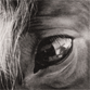 small icon of horse eye